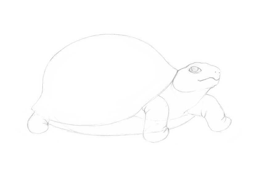 How to Draw a Turtle