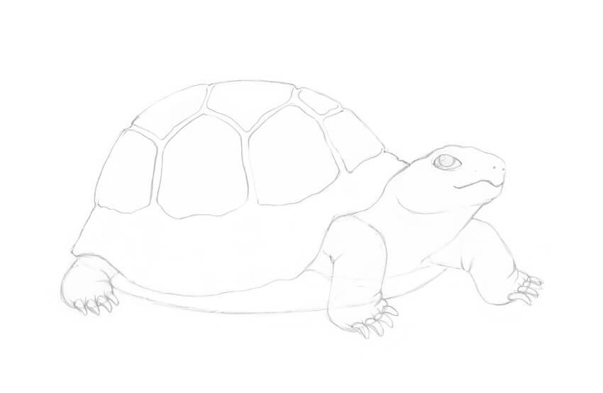 Drawing more scutes
