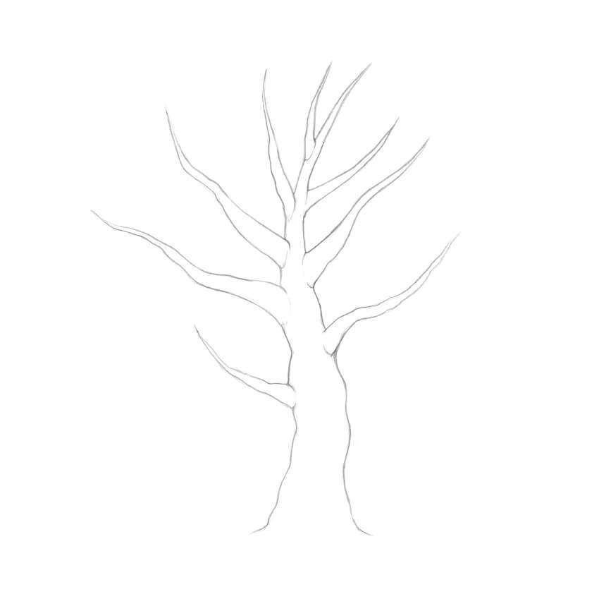 Contour Line Drawing Tree : How to draw a tree