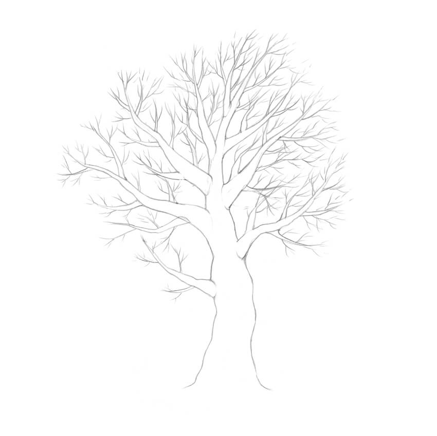 Drawing the branches and twigs