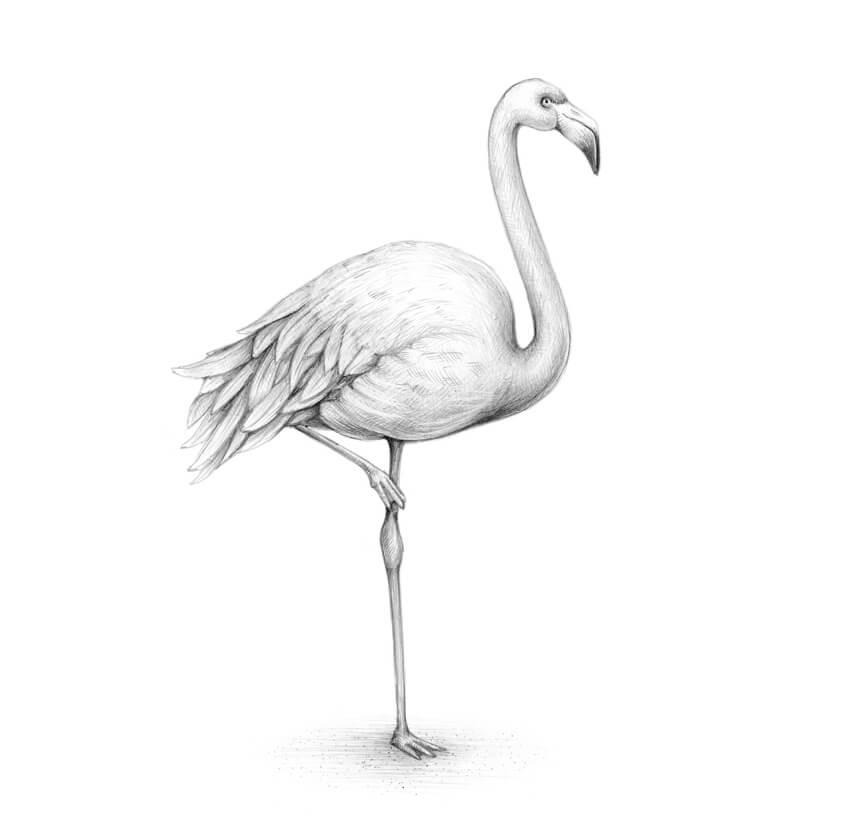 How To Draw A Flamingo Javascript World
