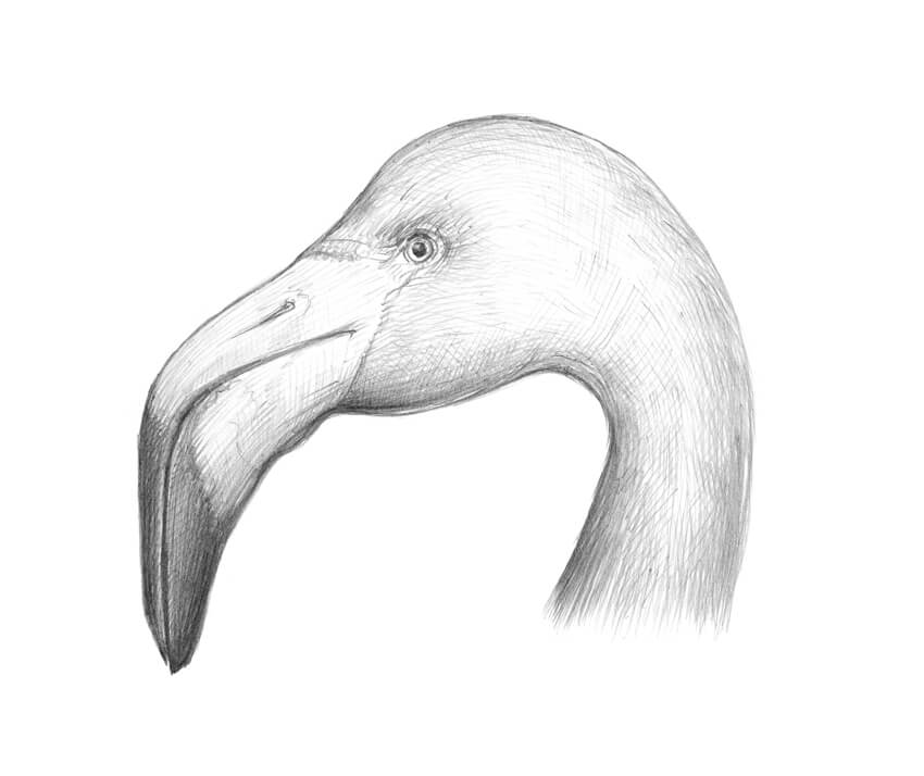 How To Draw A Flamingo Themekeeper Com