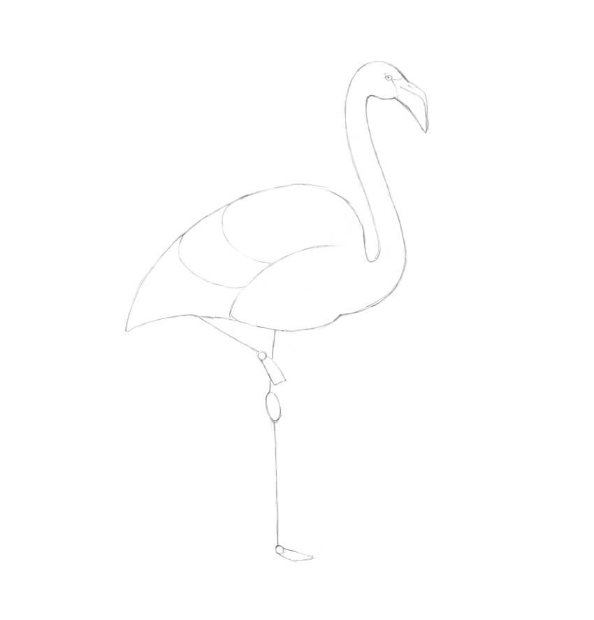 Cara Menggambar Flamingo