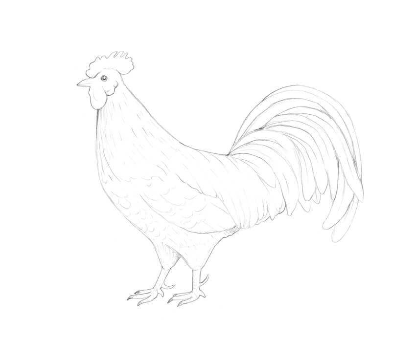 Sketching the pattern of plumage