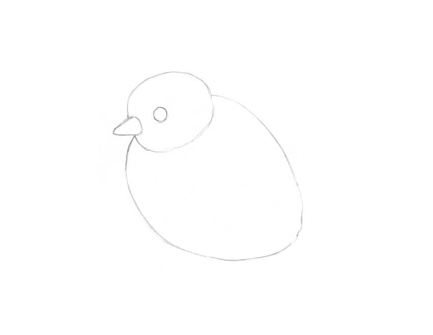 770+ Gambar Sketsa Hewan Ayam HD Terbaik