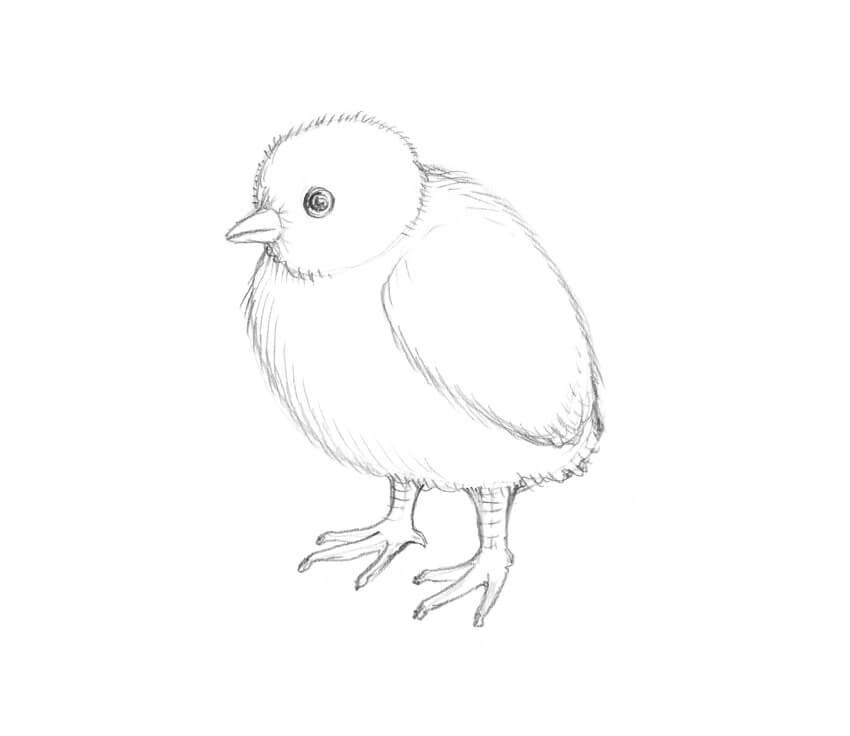 80 Gambar Sketsa Hewan Ayam HD Terbaik
