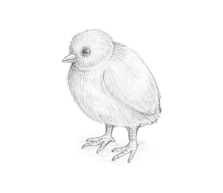 Веселый цыпленок рисунок карандашом, люблю