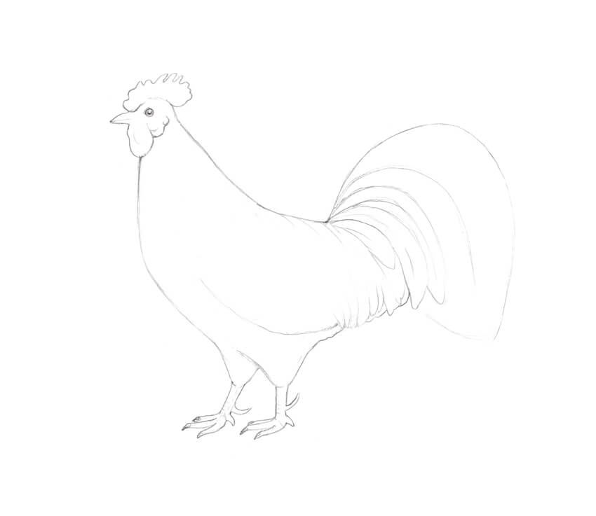Drawing the tail feathers