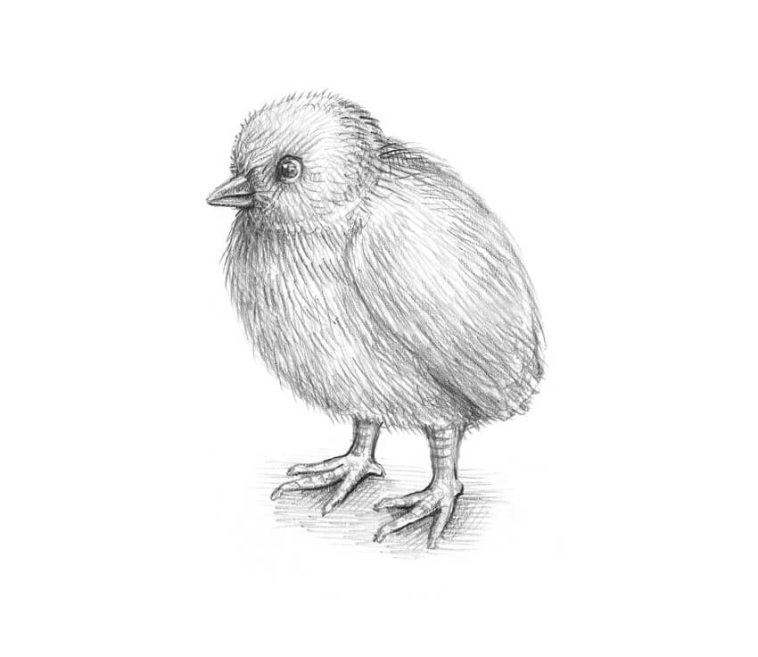 Completing the sketch of the chicken