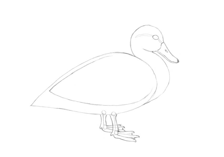 How to Draw a Duck