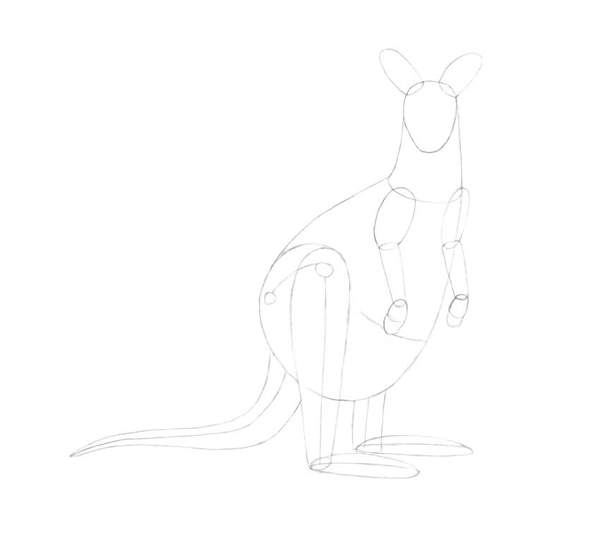 Drawing the tail of the kangaroo